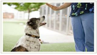 Training Your Dog To Use A Leash And Collar