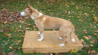 Training Your Dog The Proper Table Etiquette