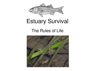 Estuary Survival