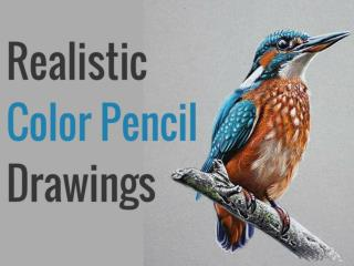 Realistic Color Pencil Drawings