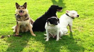 Dog Training Part I - Basic Training