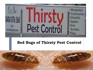 Bed Bugs of Thirsty Pest Control