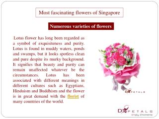 Most fascinating flowers of Singapore