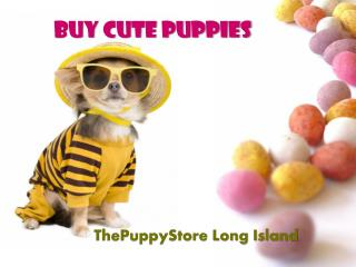 The Puppy Store NY