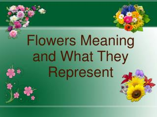 Flowers Meaning and What They Represent