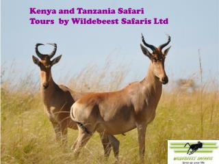 Kenya and Tanzania Safari Tours  by Wildebeest Safaris Ltd