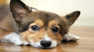 Dog Obedience Training Schools can Correct Obedience Problem