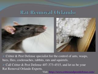 Bed Bug Control Orlando