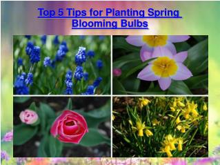 Top 5 Tips for Planting Spring Blooming Bulbs