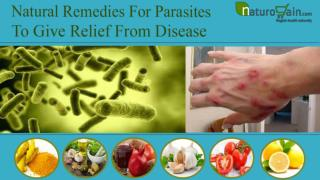 Natural Remedies For Parasites To Give Relief From Disease