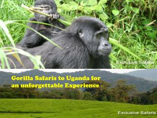 Gorilla Safaris to Uganda for an unforgettable Experience