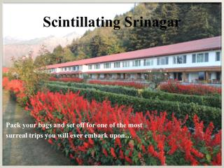 Scintillating Srinagar