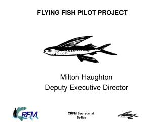 FLYING FISH PILOT PROJECT