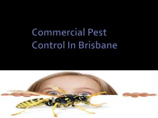 Commercial Pest Control In Brisbane