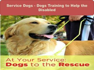 Service Dogs - Dogs Training to Help the Disabled