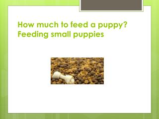 How much to feed a puppy? Feeding small puppies