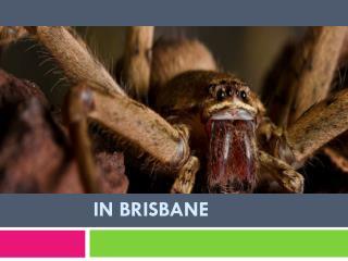 Spiders Pest control in Brisbane