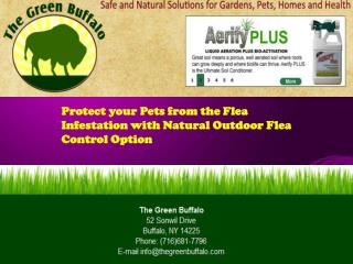 Protect your Pets from the Flea Infestation with Natural Out