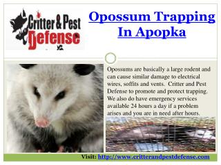 #Opossum Trapping in Apopka