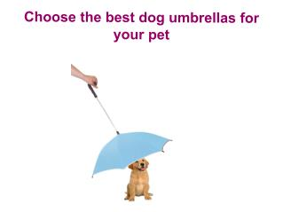 Choose the best dog umbrellas for your pet