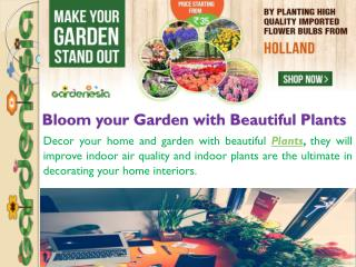 Bloom your Garden with Beautiful Plants