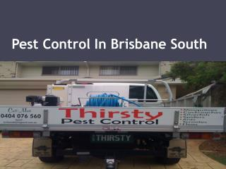 Pest Control In Brisbane South