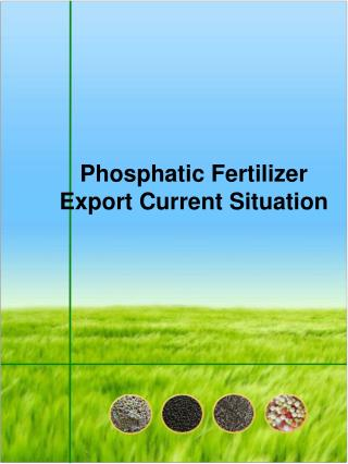 Phosphatic Fertilizer Export Current Situation