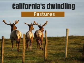 California's dwindling pastures