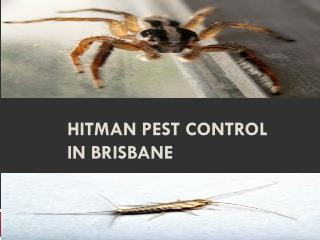 Hitman Pest Control In Brisbane