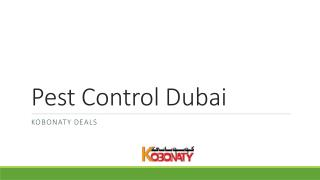 Best pest control Dubai