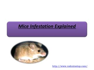 Mice Infestation Explained