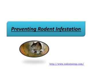 Preventing Rodent Infestation