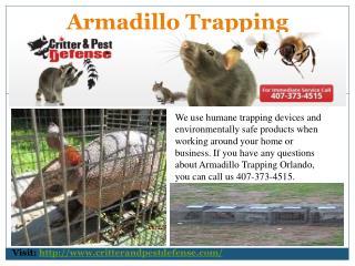 Ant Traps Orlando
