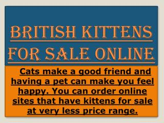 British Cats and Kittens For Sale
