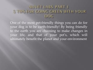 NuVet Labs: Part 1 - 5 Tips for Going Green With Your Dog