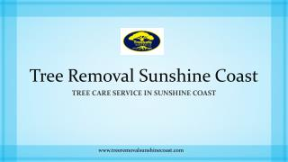 Tree Removal Sunshine Coast