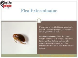 #Flea Exterminator