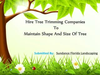 Hire Tree Trimming Companies To Maintain Shape And Size Of T