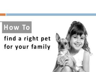 How to choose a good pet to adopt