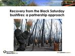Recovery from the Black Saturday bushfires: a partnership approach