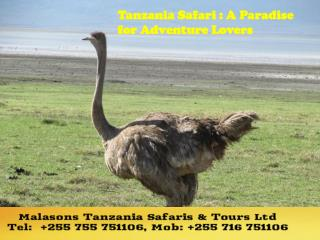 Tanzania Safari : A Paradise for Adventure Lovers