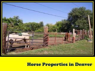 Horse Properties in Denver
