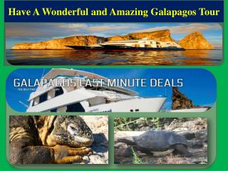 Have A Wonderful and Amazing Galapagos Tour