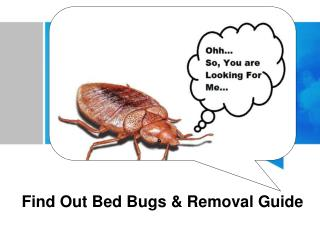 Find Out Bed Bugs & Removal Guide