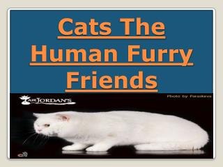 Cats The Human Furry Friends