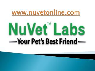 NuVet Labs| 5 Commands You Must Teach Your Dog