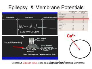 Epilepsy   Membrane Potentials