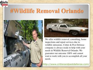 #Wildlife Removal Orlando