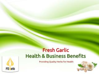 Fresh Garlic - Health and Trading Business Benefits