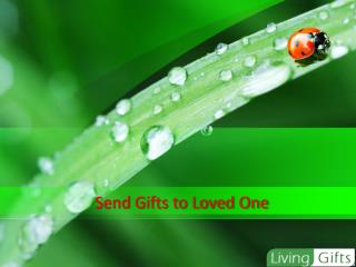 Online Flower and Gifts